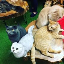 london macska kávézó, london macskás hely