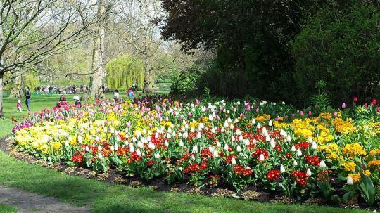 9. tulipanok